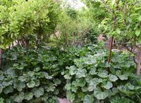 250 متر باغ در زیاران در شیپور-عکس کوچک