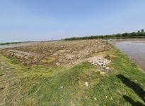 زمین کشاورزی 1000 متری در آمل در شیپور-عکس کوچک