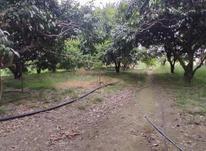 زمین 1700 متر سرخرود بافت مسکونی در شیپور-عکس کوچک