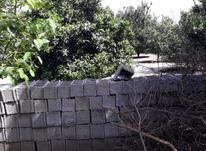 فروش زمین مسکونی600متری داخل بافت در منطقه پشت اکسین در شیپور-عکس کوچک
