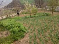 معاوضه و فروش زمین ویلایی در روستای تاکام شهر ساری در شیپور