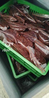 فروش کرم خاکی منجمد در گروه خرید و فروش ورزش فرهنگ فراغت در تهران در شیپور-عکس3