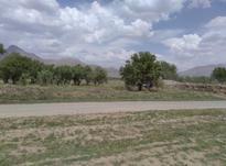 باغ انگور زمین ودرخت 1.3 هکتاری در شیپور-عکس کوچک