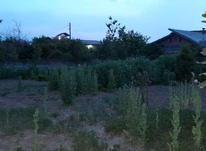 فروش زمین مسکونی 235 متر در ایزدشهر بافت در شیپور-عکس کوچک
