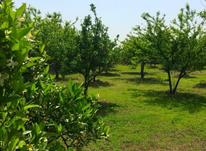فروش زمین باغی 1050 متر در آمل در شیپور-عکس کوچک