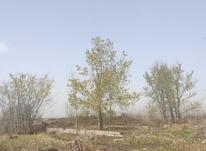 فروش زمین 483 متر در نخجیرکلایه در شیپور-عکس کوچک
