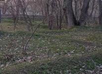 زمین سر درختی دره یری  در شیپور-عکس کوچک