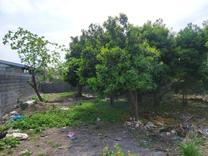 زمین مسکونی 270متری سندار دوردیوار شرایط اقساطی در شیپور