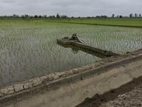 فروش زمین کشاورزی 2000 متر در امل جاده کلوده  در شیپور