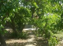 باغ به قیمت در کردزار شهریار در شیپور-عکس کوچک