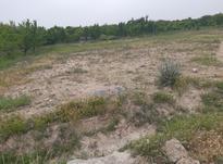 فروش زمین کشاورزی 1000 متر در ملارد در شیپور-عکس کوچک
