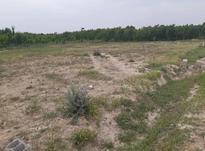 زمین کشاورزی 1000 متر در ملارد در شیپور-عکس کوچک