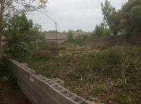 فروش زمین مسکونی 400 متر سند دار در زیباکنار در شیپور-عکس کوچک