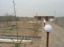 باغ 670 متر دروایقان در شیپور-عکس کوچک