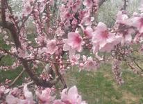 باغ 1000متری جابان دماوند  در شیپور-عکس کوچک