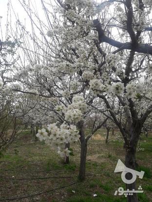 باغ 1000متری جابان دماوند در گروه خرید و فروش املاک در تهران در شیپور-عکس5