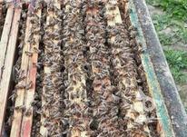 فروش کندوی زنبور عسل در شیپور-عکس کوچک