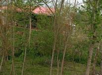 فروش زمین 600 متر در تالش در شیپور-عکس کوچک