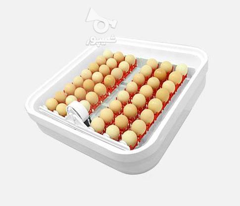دستگاه جوجه کشی مدل ایزی باتور 1 - ظرفیت 48 عددی در گروه خرید و فروش صنعتی، اداری و تجاری در تهران در شیپور-عکس3