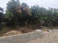 زمین داخل بافت مسکونی 220 متر در چالوس در شیپور-عکس کوچک