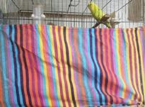 کاور قفس پارچه ضخیم  در شیپور-عکس کوچک