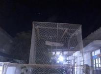 قفس پرنده توربند در شیپور-عکس کوچک