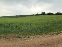 زمین کشاورزی 2000 متر در جامخانه در ارتفاعات  در شیپور