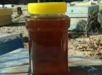 عسل وحشی گون صددرصدطبیعی ارسال رایگان در شیپور-عکس کوچک
