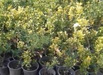 باغبانی و فضای سبز در شیپور-عکس کوچک