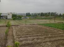 فروشی زمین کشاورزی ر در شیپور-عکس کوچک