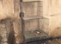 قفس سهره و قناری و مرغ عشق در شیپور-عکس کوچک