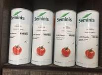 بذر گوجه فرنگی پرفروش8320 در شیپور-عکس کوچک