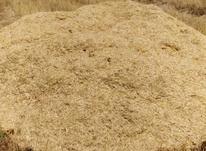 فروش کاه گندم 50انبار هر انبار  در شیپور-عکس کوچک
