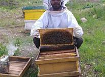 عسل طبیعی کوهستان هایی اورامانات کردستان در شیپور-عکس کوچک