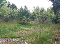 زمین مسکونی 800 متر سلیمان اباد در شیپور-عکس کوچک