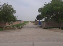فروش زمین کشاورزی 3300 متر در پرند در شیپور-عکس کوچک