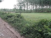زمین باغی 3300 متری برجاده روستایی در شیپور