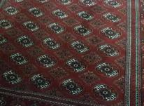 فرش روناسی 2.5*4 در شیپور-عکس کوچک