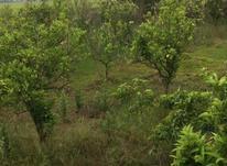 فروش باغ 1200 متری داخت بافت در فریدونکنار در شیپور-عکس کوچک