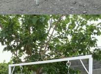 تاب اهنی دونفره بزرگ باغ ویلاحیاط در شیپور-عکس کوچک