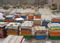 فروش کندو زنبور عسل(فول جمعیت) در شیپور-عکس کوچک