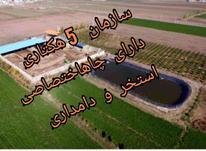 فروش دامداری و کشاورزی 50000 متر در شاهرود در شیپور-عکس کوچک