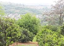 زمین 1,300 متری روستا زیبا وسطی کلا در شیپور-عکس کوچک