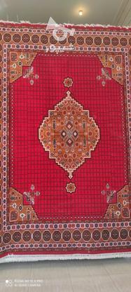 فرش ساوه***/ در گروه خرید و فروش لوازم خانگی در فارس در شیپور-عکس2