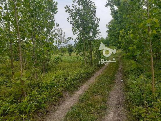 زمین 2000 متری  در گروه خرید و فروش املاک در گیلان در شیپور-عکس1