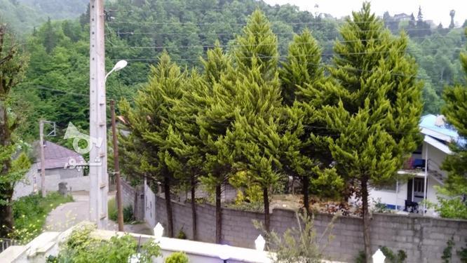 فروش ویلا لوکس جنگلی در گروه خرید و فروش املاک در مازندران در شیپور-عکس4