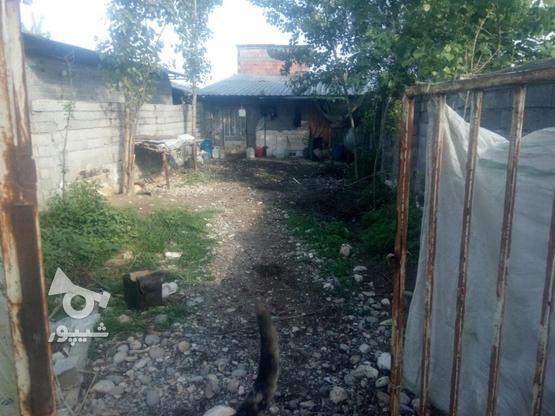 فروش دامداری در گروه خرید و فروش املاک در مازندران در شیپور-عکس2