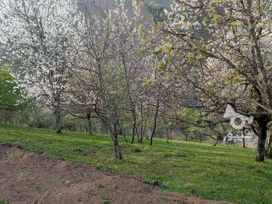 فروش زمین مسکونی 500 متر در رضوانشهر در گروه خرید و فروش املاک در گیلان در شیپور-عکس1