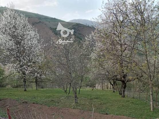فروش زمین مسکونی 500 متر در رضوانشهر در گروه خرید و فروش املاک در گیلان در شیپور-عکس2