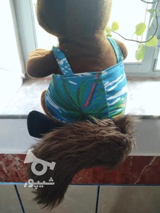 خاله قورباغه و سنجاب در گروه خرید و فروش ورزش فرهنگ فراغت در گلستان در شیپور-عکس3